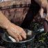 Przygotowanie owoców na wino